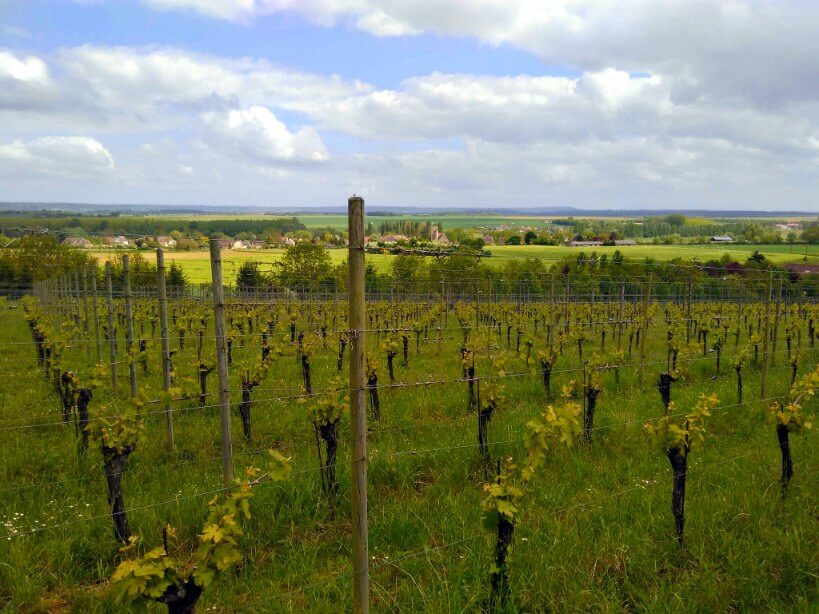 vignes les arpents du soleil dans le Calvados